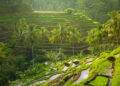Photo by  @ermakova pemasaran produk ke tiongkok - beautiful sunrise over the green rice terraces ubud bali indonesia t20 x6W4Az 120x86 - Tips Marketing dan Pemasaran Produk ke Tiongkok