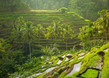Photo by  @ermakova 8 Manfaat Bisnis Ekspor bagi Negara Eksportir - beautiful sunrise over the green rice terraces ubud bali indonesia t20 x6W4Az 350x250 - 8 Manfaat Bisnis Ekspor bagi Negara Eksportir