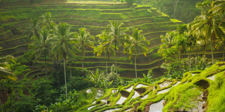 Photo by  @ermakova 7 Hasil Pertanian Indonesia Kualitas Terbaik Dunia - beautiful sunrise over the green rice terraces ubud bali indonesia t20 x6W4Az 750x375 - 7 Hasil Pertanian Indonesia Kualitas Terbaik Dunia