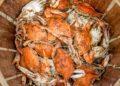iphone xs - food food orange dinner meal seafood crab crustacean shellfish t20 GgeBVo 120x86 - iPhone XS, XS Max, Mengawali Era Baru di Dunia Gadget