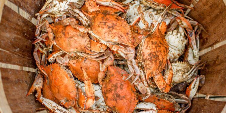 Usaha Meningkatkan Ekspor Kepiting dan Rajungan Indonesia di Pasar Asia - food food orange dinner meal seafood crab crustacean shellfish t20 GgeBVo 750x375 - Usaha Meningkatkan Ekspor Kepiting dan Rajungan Indonesia di Pasar Asia