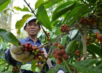 @GunawanAB via Twenty20 bisnis - coffee farmers are picking red coffee red picked coffee will produce perfect coffee beans t20 noG7Ln 350x250 - Teknologi Digital dan Bisnis di Era Revolusi Industri 4.0