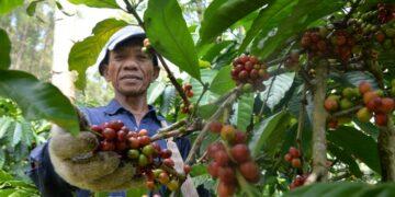 @GunawanAB via Twenty20 Tips Memulai Bisnis Ekspor Kecil-kecilan - coffee farmers are picking red coffee red picked coffee will produce perfect coffee beans t20 noG7Ln 360x180 - Tips Memulai Bisnis Ekspor Kecil-kecilan